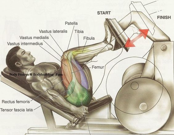 An anatomical drawing of a man performing a Leg Press on a machine with a 45-degree angle. The muscles being worked are labeled and highlighted.